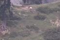 एलओसी पर सफेद झंडा दिखाकर पाकिस्तानी सेना ने उठाये भारत की जवाबी करवाई में ढेर हुए अपने 2 सैनिकों के शव