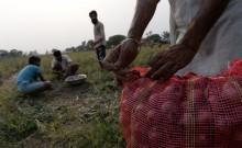 मुंबई में सीसीटीवी के जरिये पकड़े गए रात में 21 हजार की प्याज चुराने वाले चोर [वीडियो]
